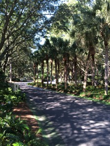 Beautiful walking trail at the Westin Hilton Head
